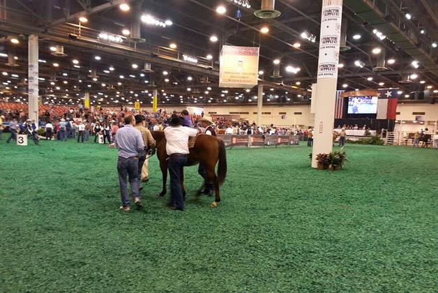 bc5705846 Rodeo y Feria Ganadera de Houston